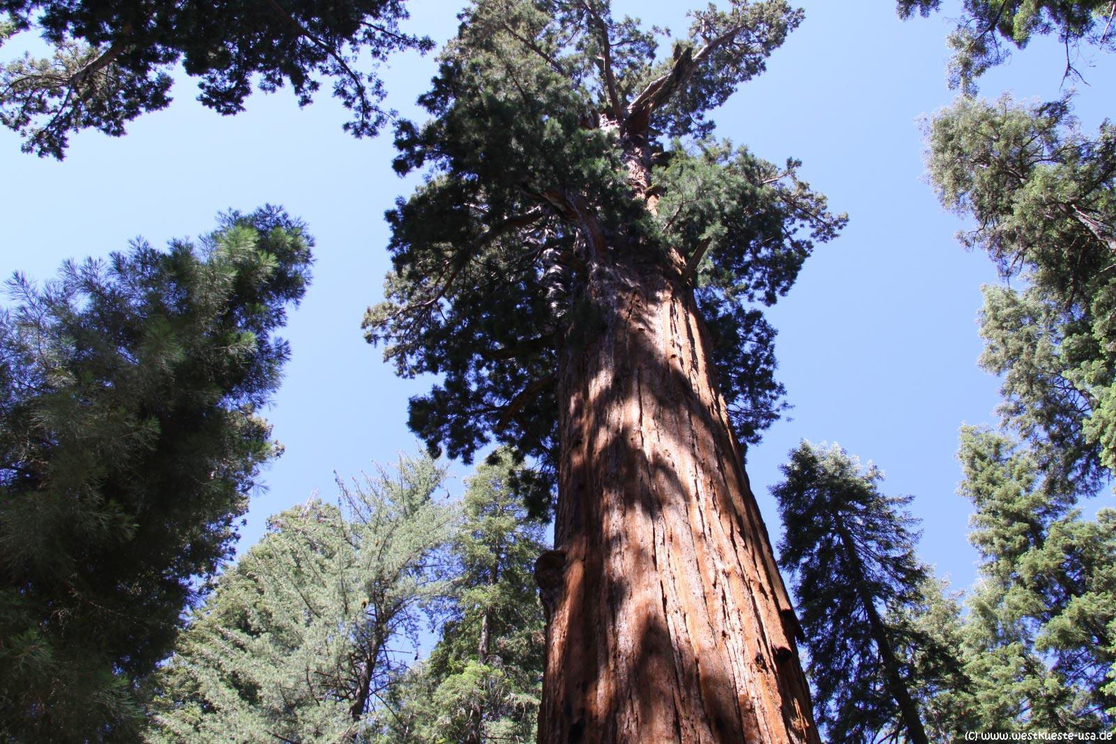 sequoia national park black single men 339 reviews of sequoia national park we have always stayed in visalia whenever we had visited sequoia national park to the sequoia park every single breath.