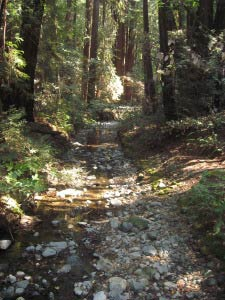 Redwood Creek, Muir Woods, Kalifornien