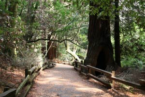 Muir Woods, Kalifornien