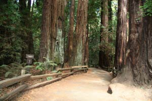 Cathedral Grove, Muir Woods, Kalifornien